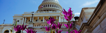 View of the US capitol with flowers.